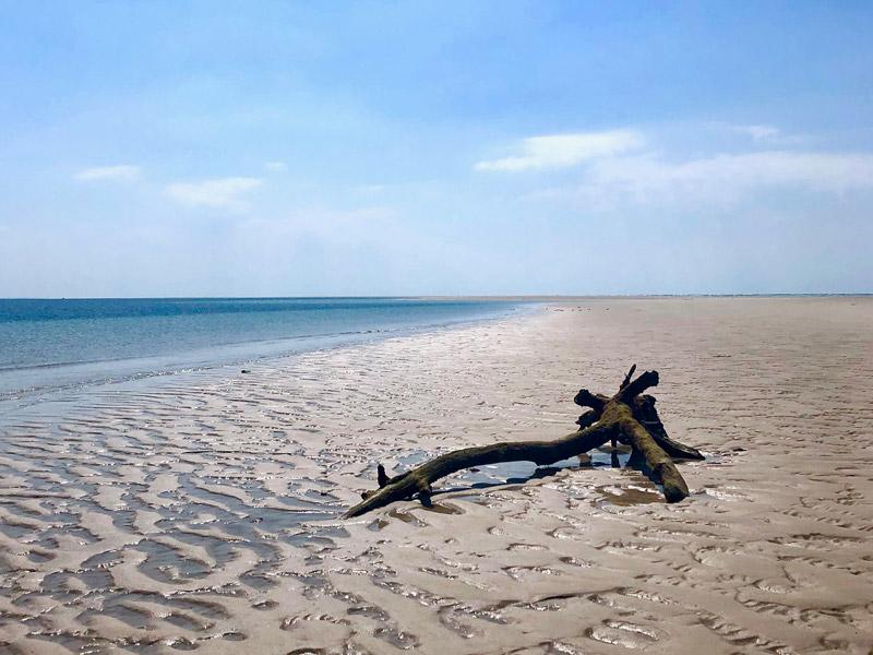 bd-island-desolation